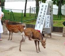 りんく・りんく京都のブログ-奈良公園