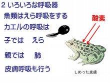 カエル 皮膚呼吸 肺呼吸