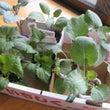 秋冬野菜の植え付け開…