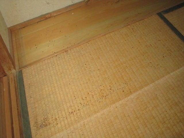 箪笥下のトコジラミの痕跡