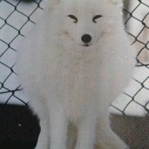 ◆イナリと白狐◆