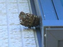 マイティハウジングのブログ-蜂の巣