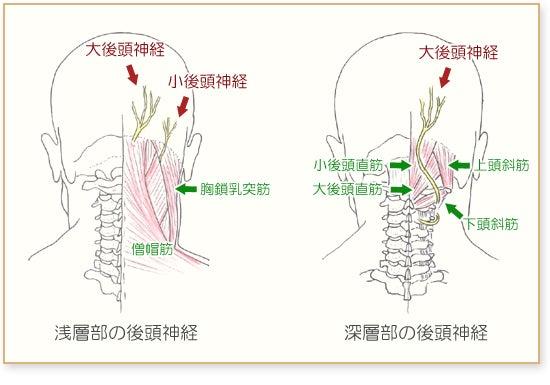 ツボ 後頭 神経痛 後頭部・耳後ろのビリビリした痛み|後頭神経痛、頭痛のツボ|ツボネット 鍼灸の症例が検索できるツボ辞典