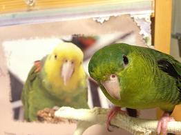 小鳥日和-たまごろう4
