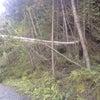 ∵ 倒木処理の画像