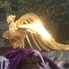 カラフル市で輝く鳳凰に出会ったの画像
