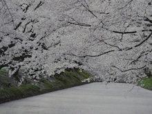 神戸のカラーリスト スタイリスト  トータル素敵プロデューサー☆みつこのブログ-ピンクイメージ