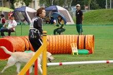 ドッグスポーツ-J10
