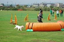 ドッグスポーツ-G13