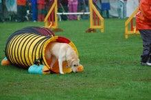 ドッグスポーツ