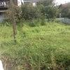 きもったま農園の草取りの画像