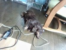 犬太郎が来た!-IMG_20130922_125531.jpg