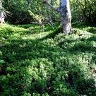 天地境 美し森の記憶の記事より