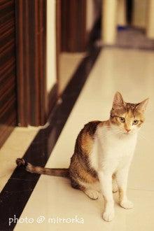 中国大連生活・観光旅行ニュース**-大連 Next station cat 猫カフェ