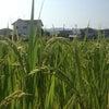 ついに畑もできました~!の画像