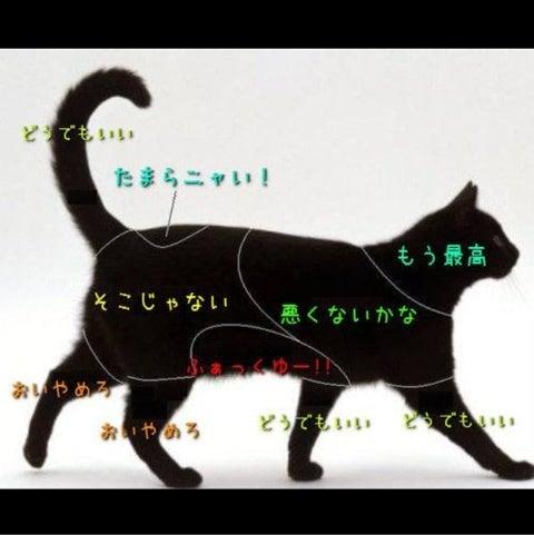 猫の尻尾が震える8つの理由 - nekochan.jp