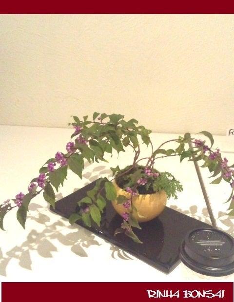 bonsai life      -盆栽のある暮らし- 東京の盆栽教室 琳葉(りんは)盆栽 RINHA BONSAI-琳葉盆栽 ムラサキシキブ