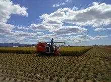 コダマ農場のブログ~夢と希望が持てる農業へ~