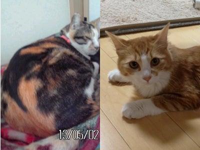 クレイアートでつくる猫 nekonoのブログ