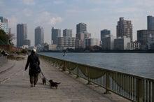所沢の犬猫専門ペットシッタートコトコ 栗原明子-お散歩