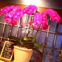 ピンクの胡蝶蘭と元気…