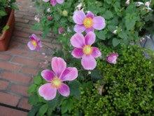 伊豆高原モンゴメリーブラウンの気ままなブログ-1381204192812.jpg