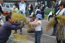 浄土宗災害復興福島事務所のブログ-2013100506ふくスマ稲刈り⑬脱穀