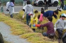 浄土宗災害復興福島事務所のブログ-2013100506ふくスマ稲刈り⑨稲刈り