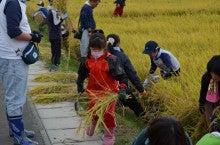 浄土宗災害復興福島事務所のブログ-2013100506ふくスマ稲刈り⑦稲刈り