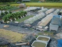 耕作放棄地を剣先スコップで畑に開拓!有機肥料を使い農薬無しで野菜を栽培する週2日の農作業記録 byウッチー-131008ウッチー式・今日の農作業の出来栄え03