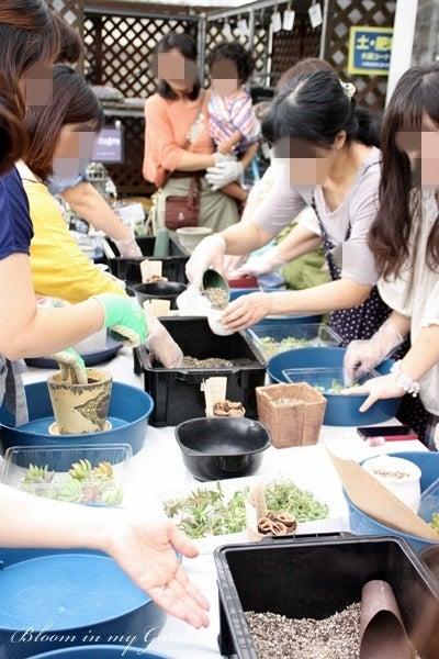 bloom in my garden ~花咲くわたしの庭~ぶる子のガーデニングブログ-寄せ植え作業