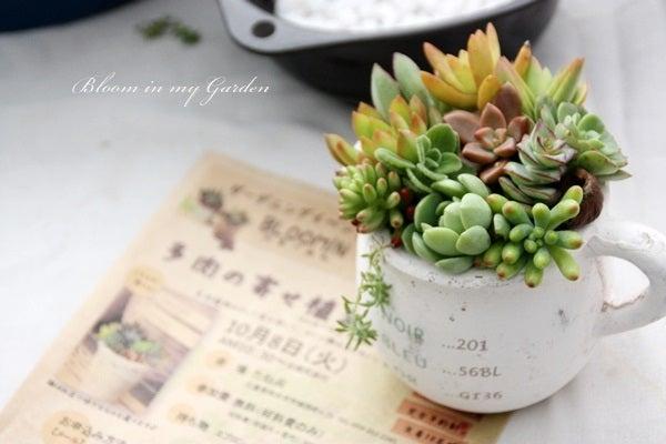 bloom in my garden ~花咲くわたしの庭~ぶる子のガーデニングブログ-寄せ植えとチラシ