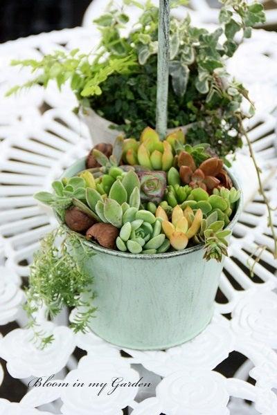bloom in my garden ~花咲くわたしの庭~ぶる子のガーデニングブログ-K.N さま