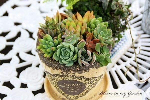 bloom in my garden ~花咲くわたしの庭~ぶる子のガーデニングブログ-H.M さま