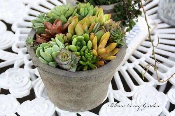 bloom in my garden ~花咲くわたしの庭~ぶる子のガーデニングブログ-M.K.さま
