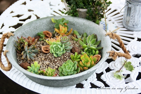 bloom in my garden ~花咲くわたしの庭~ぶる子のガーデニングブログ-U 様