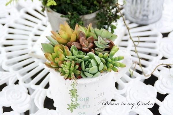 bloom in my garden ~花咲くわたしの庭~ぶる子のガーデニングブログ-K.M.様