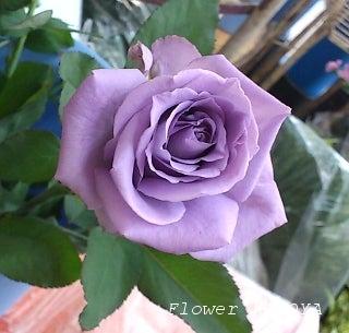 ワレモコウ~感謝 福井市のお花屋さんブログ-ブルーローズアプローズ
