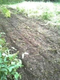 野菜畑で会いましょう-131012_174211.jpg