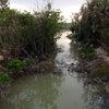 河を浄化するマングローブの森視察 @海の大掃除『うーとーと一』実行中の画像