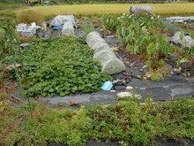 耕作放棄地を剣先スコップで畑に開拓!有機肥料を使い農薬無しで野菜を栽培する週2日の農作業記録 byウッチー-131015ウッチー式・今日の農作業の出来栄え01