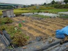 耕作放棄地を剣先スコップで畑に開拓!有機肥料を使い農薬無しで野菜を栽培する週2日の農作業記録 byウッチー-131015ウッチー式・今日の農作業の出来栄え04