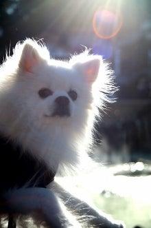 $愛犬スノーのブログ~犬が来てからデジイチかじりました~