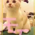 トリミング★10/1の記事より