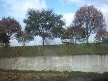 $メイブレラン潟さんのブログ-川沿いの並木道