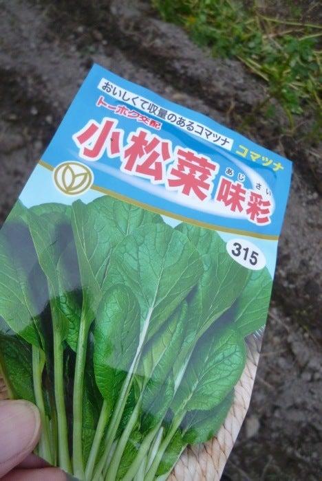 京都で自然な農!しましま畑でつかまえて♪-こまつな1