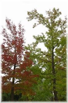 毎日はっぴぃ気分☆-2色の木