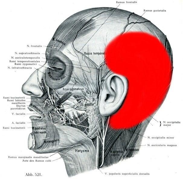 頭痛(側頭部痛) | 大阪 寝屋川 整体の和(なごみ)