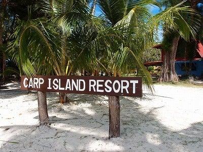カイロプラクティショナー・はるきち日記-carp island