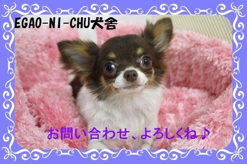 $福岡ブリーダーEGAO-NI-CHU(エガオーニーチュ)犬舎